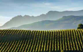 Wein,Spanien,Weinregion,Berge, Rebberge, Bodegas, Reservas, Medoc, Weinhaendler,Geschichte, Familie, Crus, Superpremiums, Qualitaet, Rioja, Rioja Wein, Topwein,