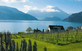 Zentralschweiz, Weinbau, Ottiger, Rosenau, Kastanienbaum, Horw, Vierwaldstättersee, Reben, Pilatus, Bio, Vinatura-Regeln, umweltschonend, energiesparend, Familie,