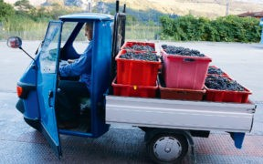 Agraria del Riva del Garda, Garda Riva, Italien, Wein, Weinkellerei, Oelmuehle